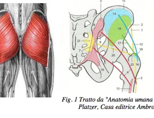 Gluteus Machine Vs Squat.